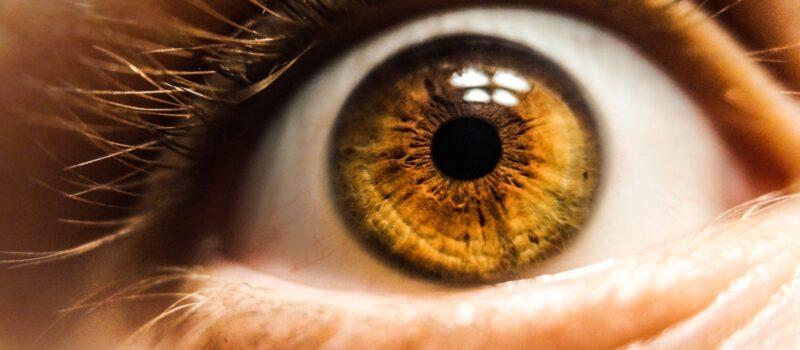brown eyed human